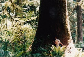 tree hugger / photo