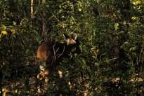 deer_1525