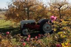 tractor_rose_1941