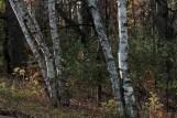 In Battle Creek/Indian Mounds Regional Park