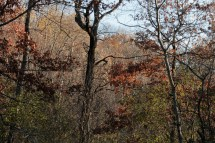 fall_color_trees_1554