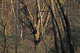 autumn_trees_1555