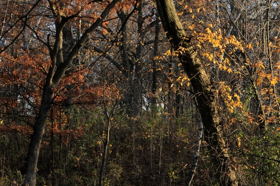 fall_color_trees_1560