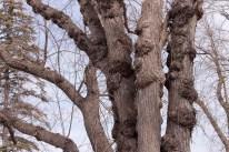 tree_3734