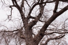 tree_3770