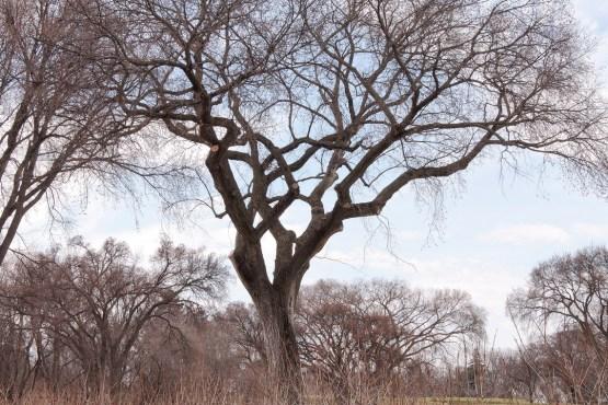 elm_tree_3883