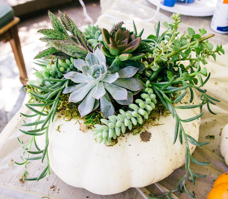 DIY Pumpkin Succulent Fall Decor Home