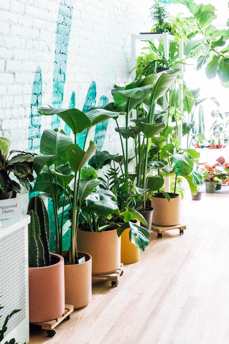 Plant Styling Inspiration At The Sill