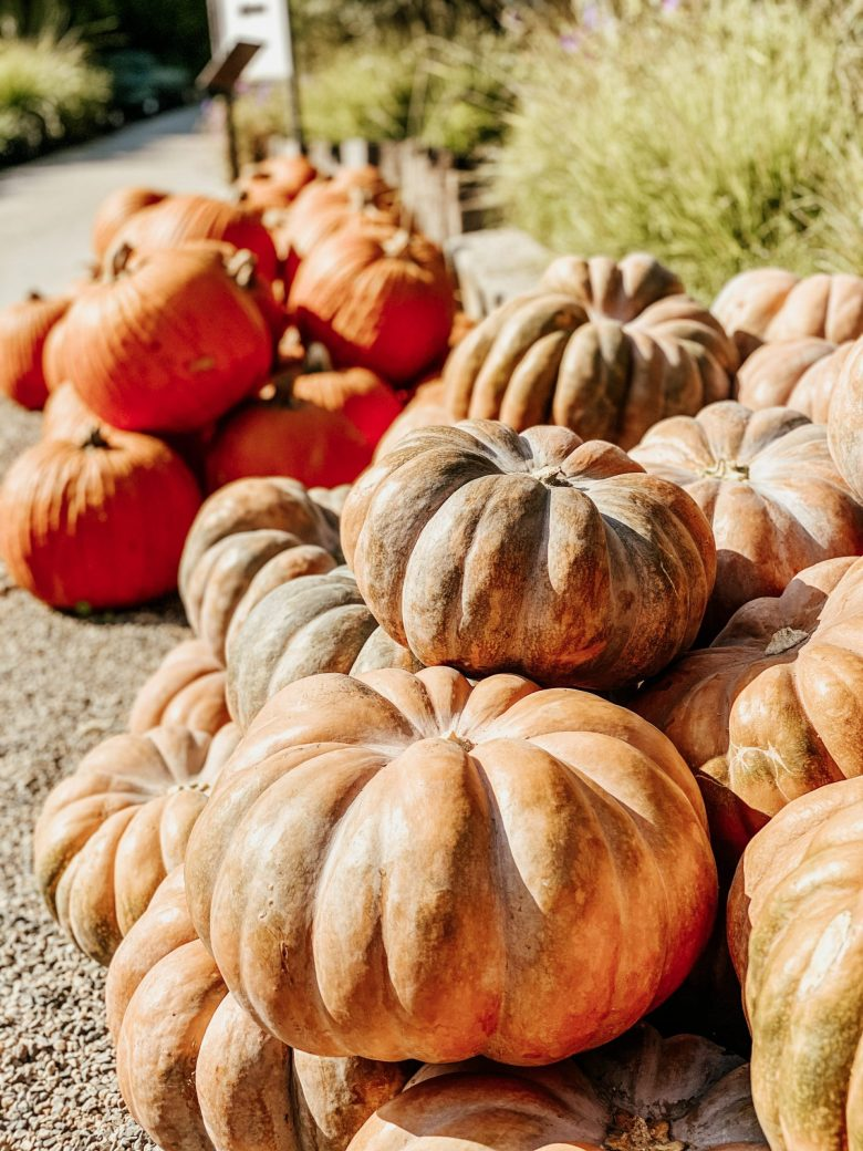a pile of heirloom pumpkins ready to be picked!