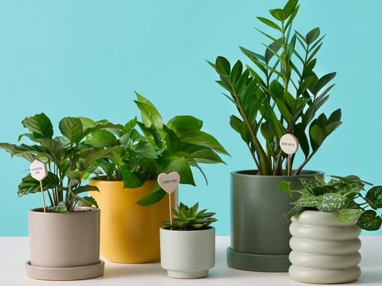 A bounty of beautifully potted plants!