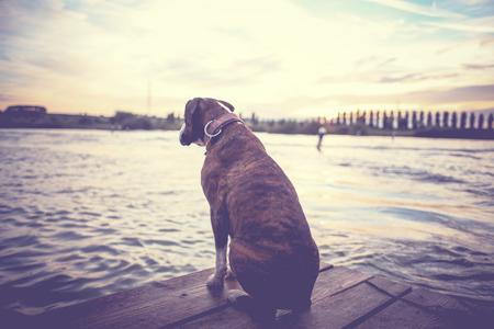 Dog & Lake