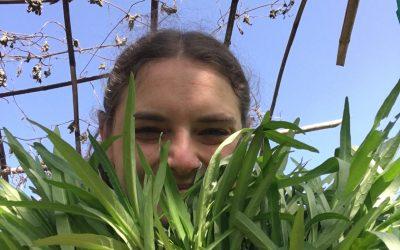 A Volunteer Experience – Elora