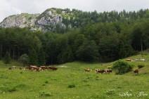 Kisovec02