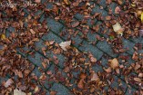 Fallen leaves, fallen leaves on the ground...