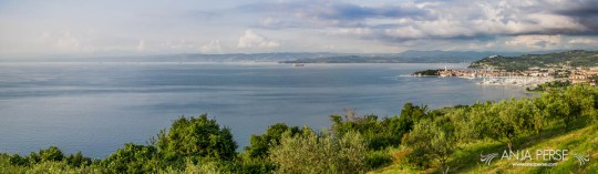 Panorama of Slovenian and Italian coast, visible from Belvedere.