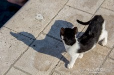Cat with a shadow
