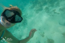 Snorkling and swimming above sting ray (on the right side), Antigua, Caribbean