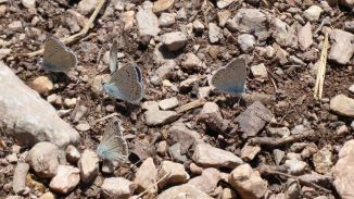 Butterflys am See