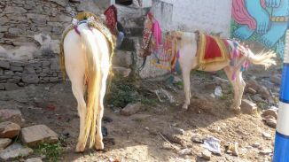 001_Pushkar