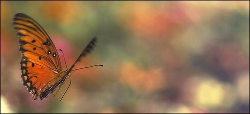 focus-butterfly.jpg