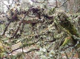 Kamouflagefärgat ... trendigt i naturen!