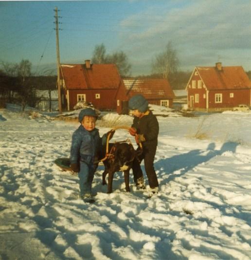 Här är han, min första egna hund - boxern Rasso som älskade att dra barnen i pulkan.