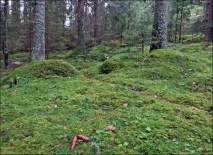 en skog som inte finns mer...