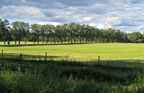 En härlig sommarkväll ... utsikt mot den fina allén vid Grensholm