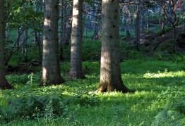 ... djup grönska och solens strålar möts.