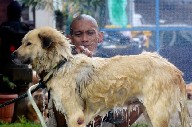 Rehabilitasi Anjing Liar-Aulia Rachman (15)