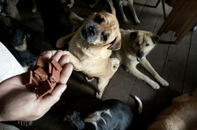 Rehabilitasi Anjing Liar-Aulia Rachman (20)