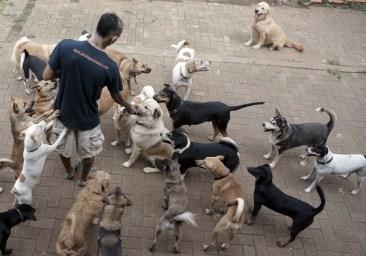Rehabilitasi Anjing Liar-Aulia Rachman (27)