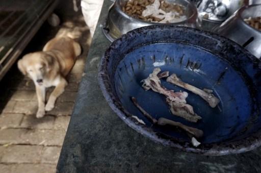 Rehabilitasi Anjing Liar-Aulia Rachman (37)