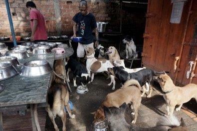 Rehabilitasi Anjing Liar-Aulia Rachman (38)