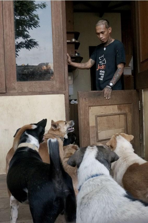 Rehabilitasi Anjing Liar-Aulia Rachman (44)