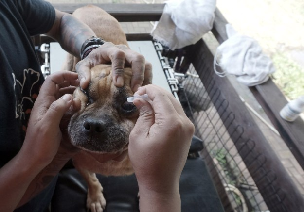 Rehabilitasi Anjing Liar-Aulia Rachman (50)