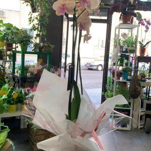 002 planta de orquidea