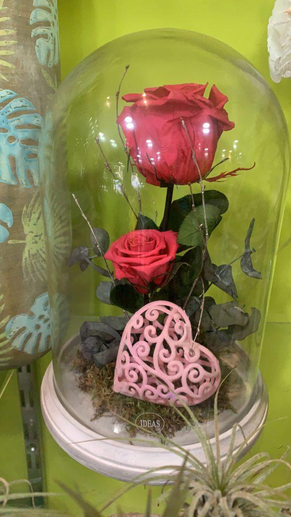 003 cupula de rosa preservada