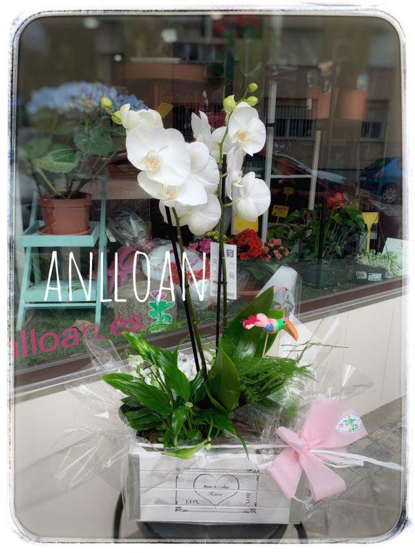 007 centro de plantas con orquidea