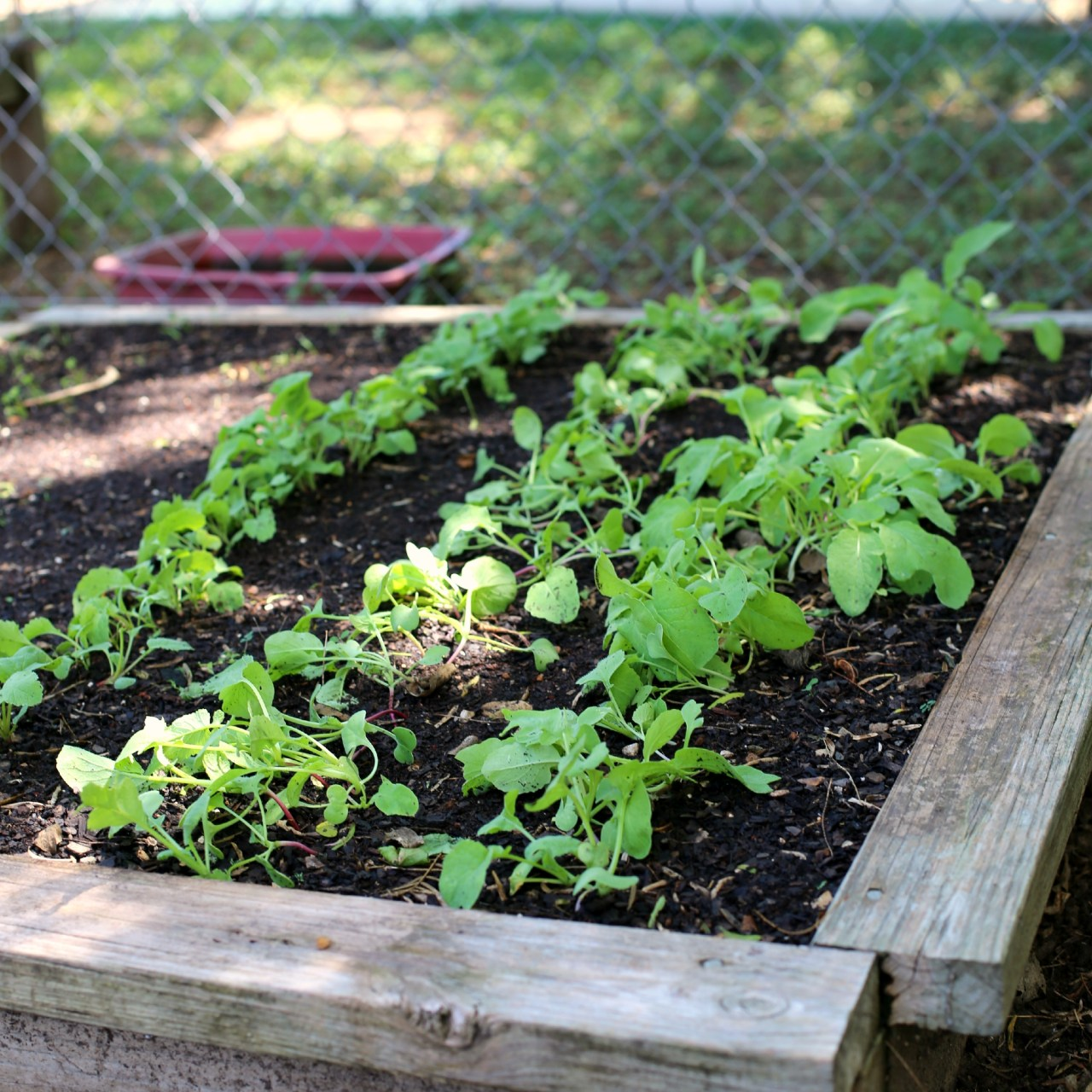 How to Build Raised Bed Garden Boxes – Part I