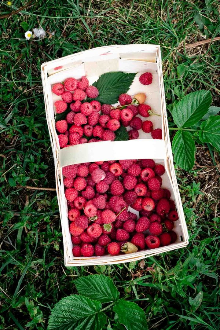 Basket with freshly picked raspberries #summerberries #raspberries | via @annabanana.co