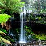 Image of Russell Falls taken on a chasing waterfalls trip in Tasmania