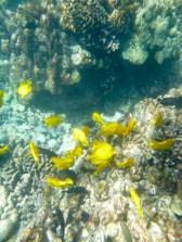 Hawaii Big Island - Snorkelling at Two Step
