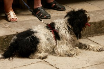 Shaggy puppy in Rocamadour
