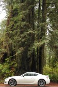Giant Redwoods at Redwood National and State Parks, California