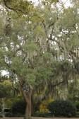City Park, New Orleans, Louisiana