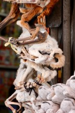 Llama foetuses at the 'Witch Market' in La Paz, Bolivia