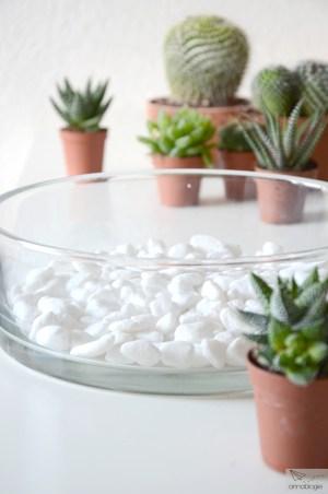succulents - annablogie