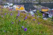 Njusfjord (1)
