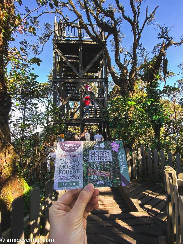 A watch tower and a hand holding a ticket that says mossy forest